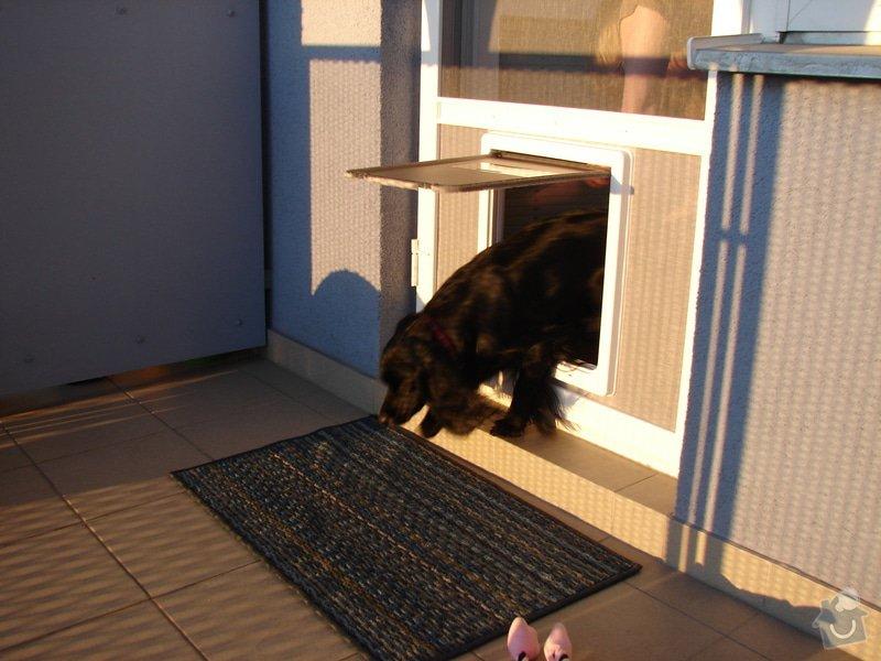 Dveřní síť proti hmyzu s průlezem pro psa: DSC04563