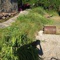 Zahradnicke prace img 0502