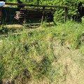 Zahradnicke prace img 0508