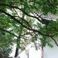 Oprava casti strechy imag0192