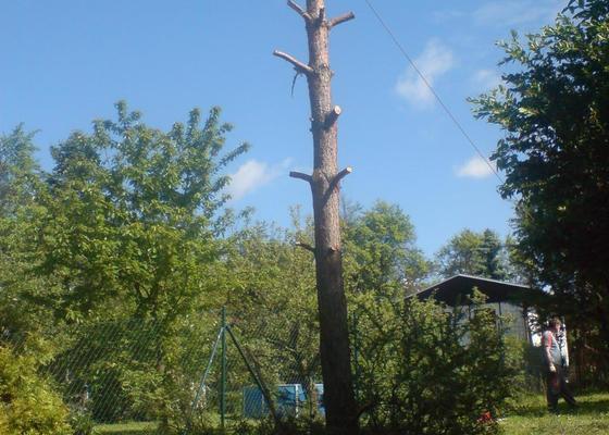 Pokácení borovice