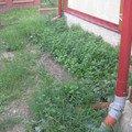 Zamkova dlazba u rodinneho domu img 7585