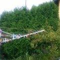 Zahradnicke sluzby wp 20140805 006