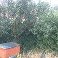 Zahradnicke sluzby wp 20140805 009