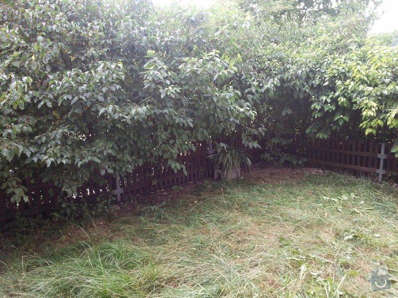 Zahradnické práce -úprava předzahrádky 34m2 Beroun : 20140809_152122