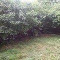 Zahradnicke prace uprava predzahradky 34m2 beroun 20140809 152122