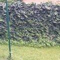 Zahradnicke sluzby prostrih keru uprava skalky vysazeni novyc obr4 prostihani prosavniku