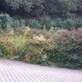Zahradnicke sluzby prostrih keru uprava skalky vysazeni novyc obr1 pas keru