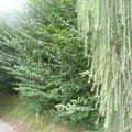 Poptavam zahradnicke prace p1070277