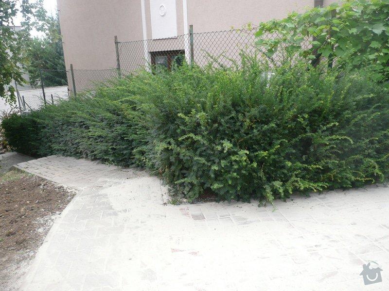 Poptavam zahradnicke prace: P1070276