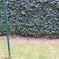 Zahradnicke sluzby prostrih keru uprava skalky vysazeni novyc 20140906 175250
