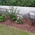 Zahradnicke sluzby prostrih keru uprava skalky vysazeni novyc 20140906 175244