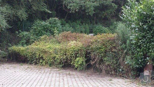 Zahradnické služby, prostřih keřů, úprava skalky, vysazení nových keřů: 20140906_180648