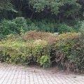 Zahradnicke sluzby prostrih keru uprava skalky vysazeni novyc 20140906 180648