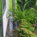 Odtok vody venku u domu zatekani kanalizace p1160554