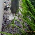 Odtok vody venku u domu zatekani kanalizace p1160557