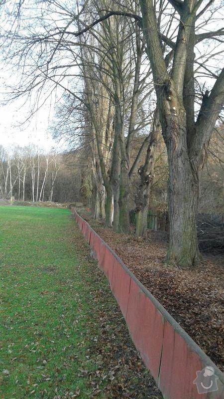 Kácení stromů: IMG-20141213-WA0002