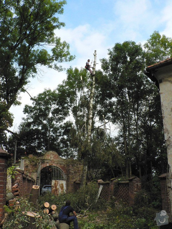 Rizikové kácení stromů: P1070431