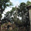 Rizikove kaceni stromu p1070431