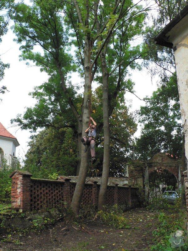 Rizikové kácení stromů: P1070400