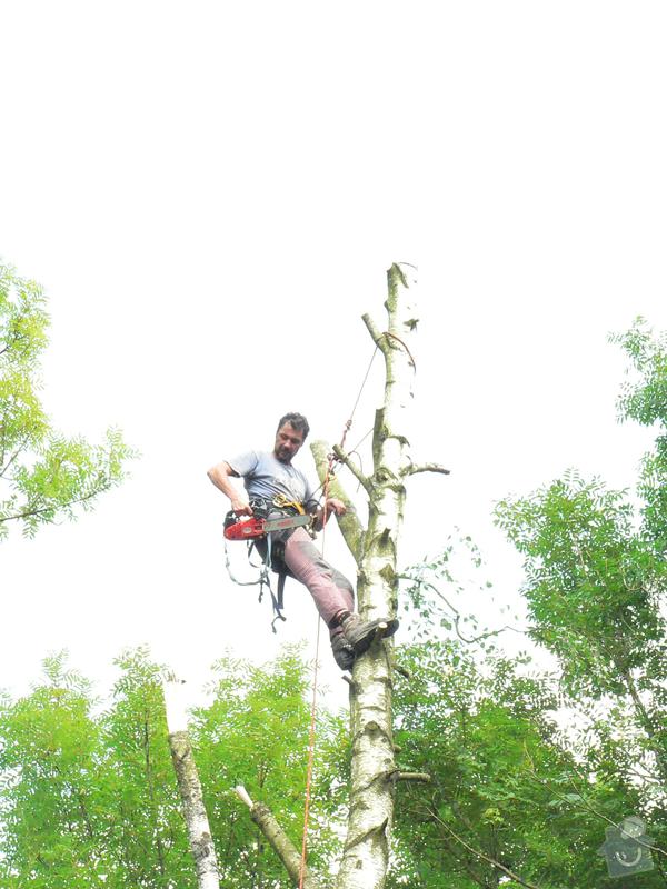 Rizikové kácení stromů: P1070430
