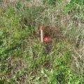 Drateny plot 160 cm asi 130 m pozemek oznaceni