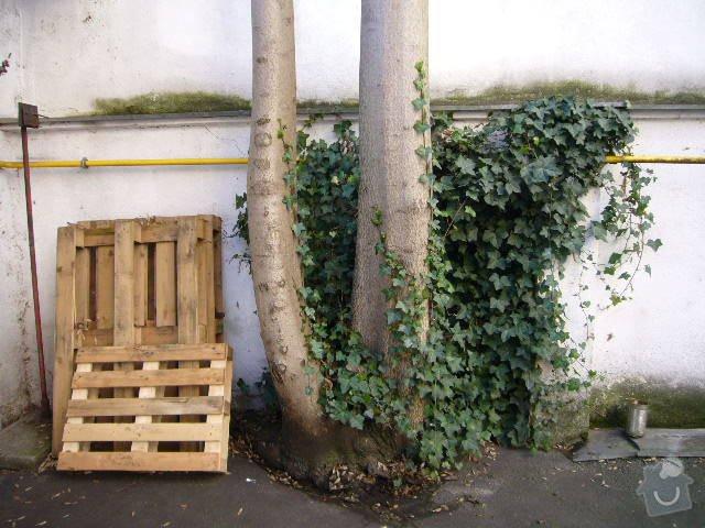 Pokácení stromu: P1080900