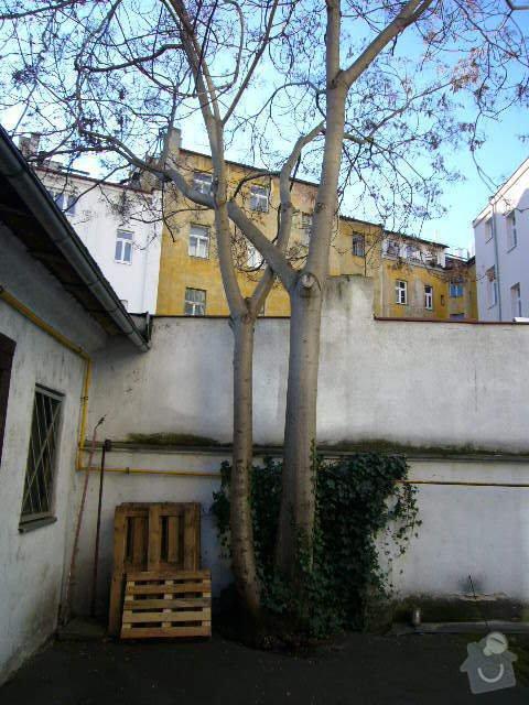 Pokácení stromu: P1080901