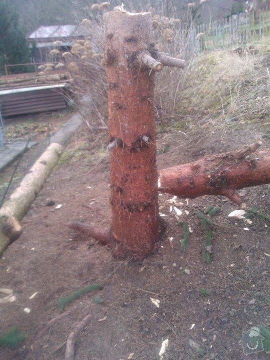 Odstranění pařezů po pokácených stromech: Kozak_parez_2