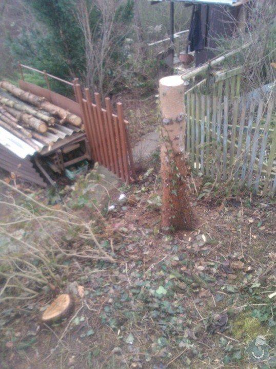 Odstranění pařezů po pokácených stromech: Kozak_parez_3