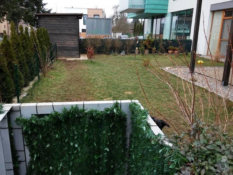 Zahradnické práce - trávník, travní koberec 35-40m2: 20150215_112628