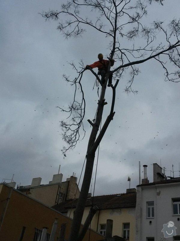 Pokácení stromu: 14