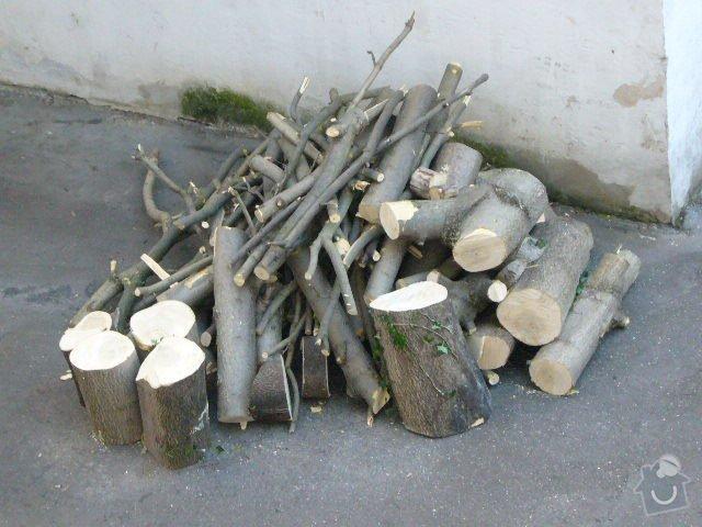 Pokácení stromu: 23