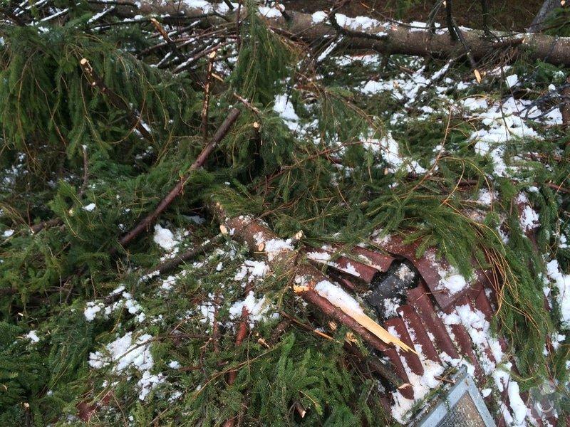 Oprava střechy po pádu stromu na chatě ve Frýdlantě nad Ostravicí: IMG_0839