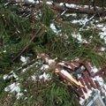 Oprava strechy po padu stromu na chate ve frydlante nad ostra img 0839