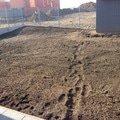 Travni koberec obrazek 1