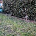 Realizace male zahrady dsc 0136