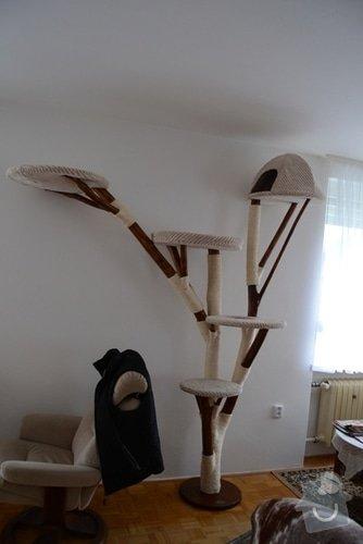 Kočičí strom: DSC_0879_1_