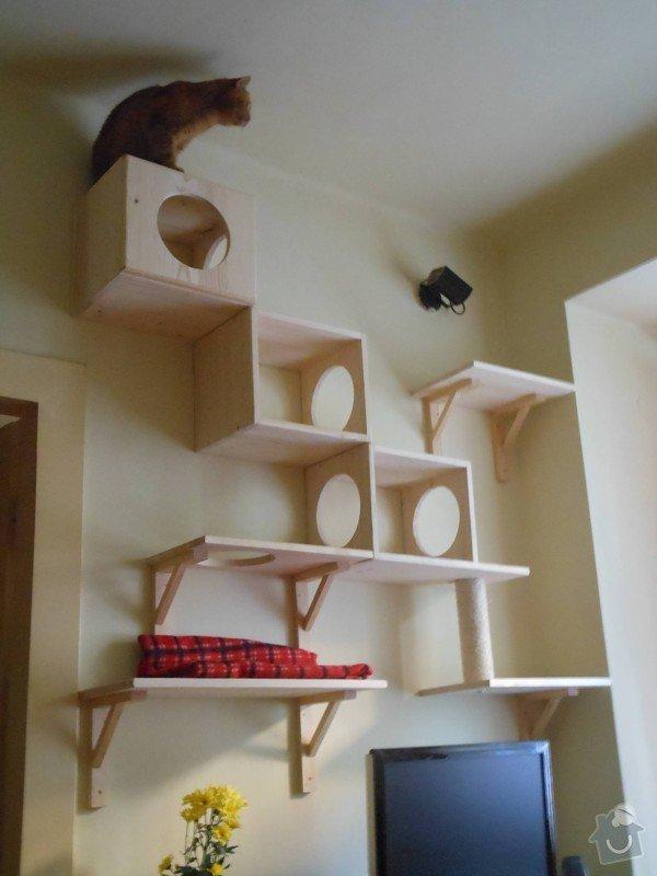 Kočičí strom: DSCN1137