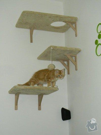 Kočičí strom: hriste_u_Pavly_17_