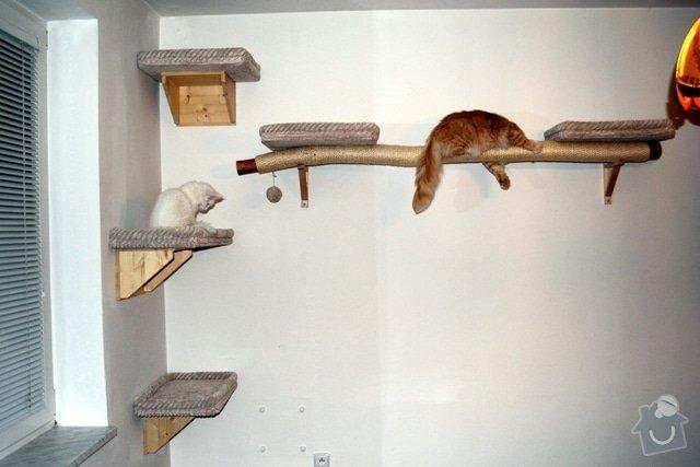 Kočičí strom: zadrapova_23_