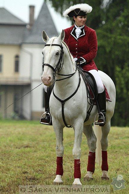 Fotografování koní: elegance-195