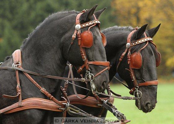 Fotografování koní