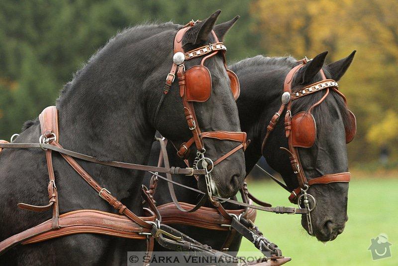 Fotografování koní: hubertova-jizda-330