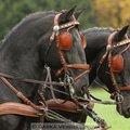 Fotografovani koni hubertova jizda 330