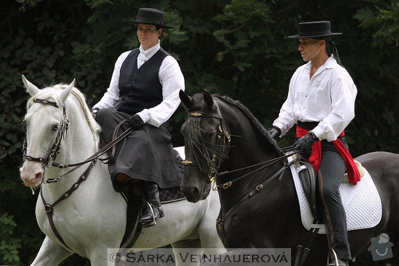 Fotografování koní: IMG_6650