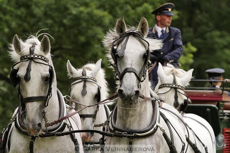 Fotografování koní: maraton