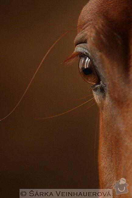 Fotografování koní: oko-do-duse-276