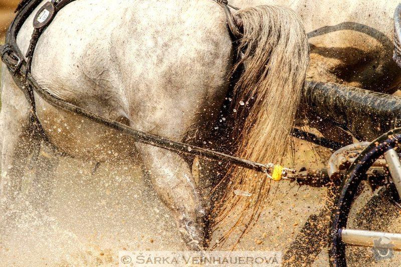Fotografování koní: sprezeni