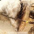 Fotografovani koni sprezeni